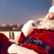 Christmas Hotel Deal